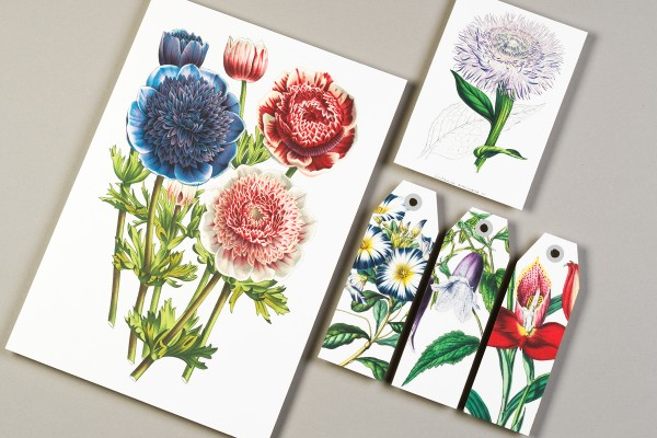 Pepin Press PC Flowers 04 600x400 1
