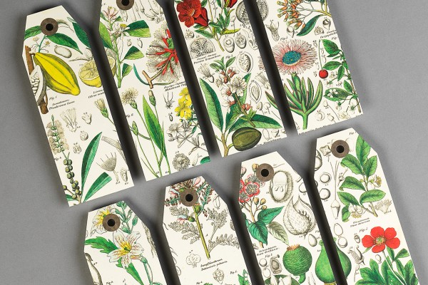 Pepin Press PC Flowers 05 600x400 1